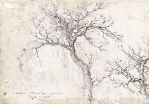 By Bloemaert - Study of a tree