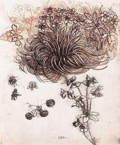 By Da Vinci - Plants and flowers