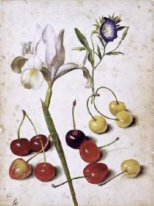 By Flegel, G. - Flowers and fruits