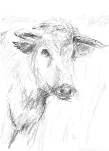 By myself - A cow in frontal view