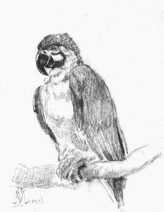 By Saint-Marcel, Edme - A parrot