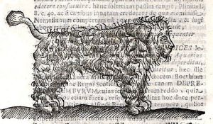 By Cirino, Andrea - Drawing of a dog into the book 'De natura, et solertia canum liber singularis'. 1653