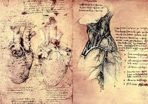 By Da Vinci - Studies of physiology and anatomy